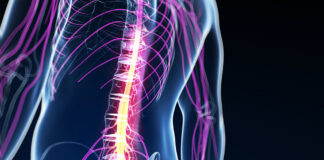 The Spinal Chord