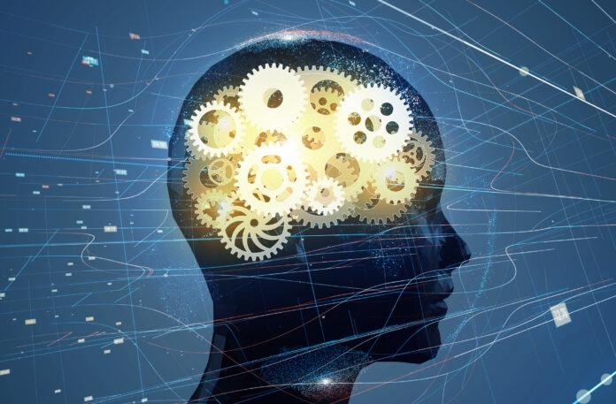 The Brain's Immune System